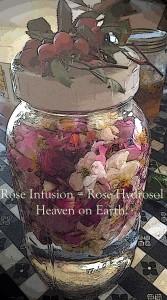 RoseInfusionHipsSept2014